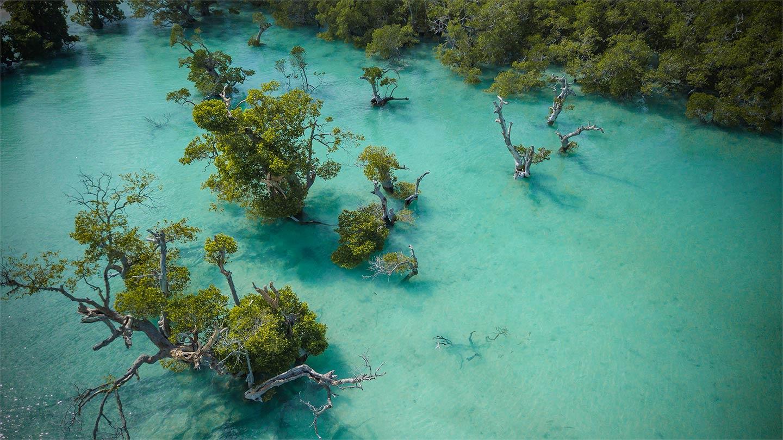 untracked media rote mangroves nemberala