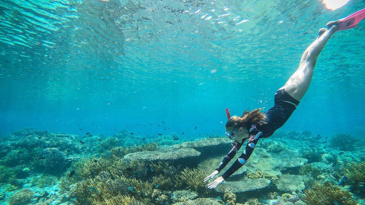 komodo national park snorkelling royal fortuna cruises